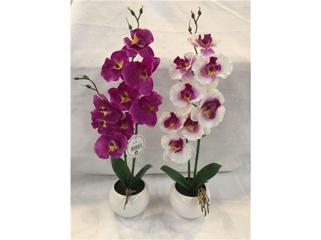 Orkide fås i 2 forskellige farver