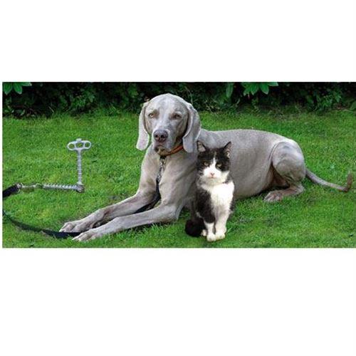 Hundeanker m/ støddæmper